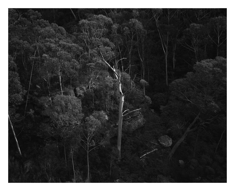 Katoomba Creek Blue Mountains fine art print by Damien Milan.