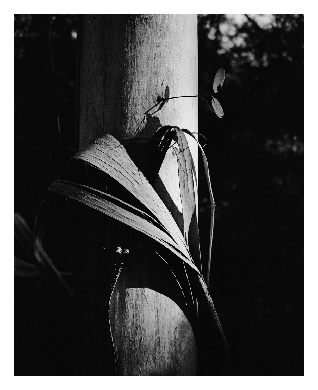 Eucalyptus bark print, Katoomba Blue Mountains